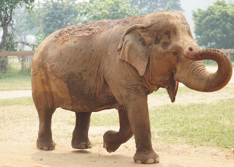 Why Elephant Nature Park Will Touch Your Heart | Are you visiting Thailand and you're interested in interacting with elephants in an ethical manner? Read more about Elephant Nature Park, an elephant sanctuary where elephants are treated with dignity and care. Think retirement home for elephants who have suffered over the years!