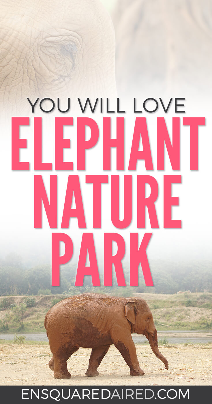 Why Elephant Nature Park Will Touch Your Heart | Are you visiting Thailand and you're interested in interacting with elephants in an ethical manner? Read more about Elephant Nature Park, an elephant sanctuary where elephants are treated with dignity and care. Think retirement home for elephants who have suffered over the years! #travel #chiangmai #elephantnaturepark #thailand