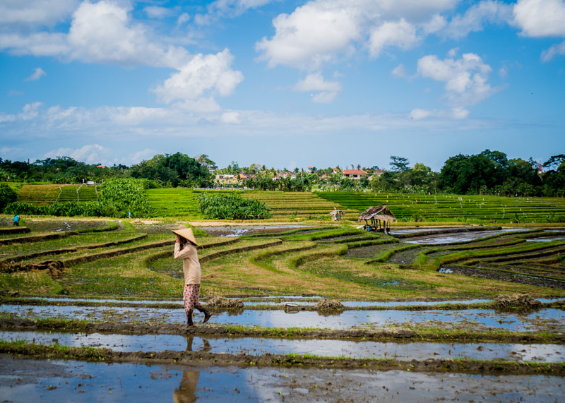 living as a nomad - bali rice fields and rice farmer