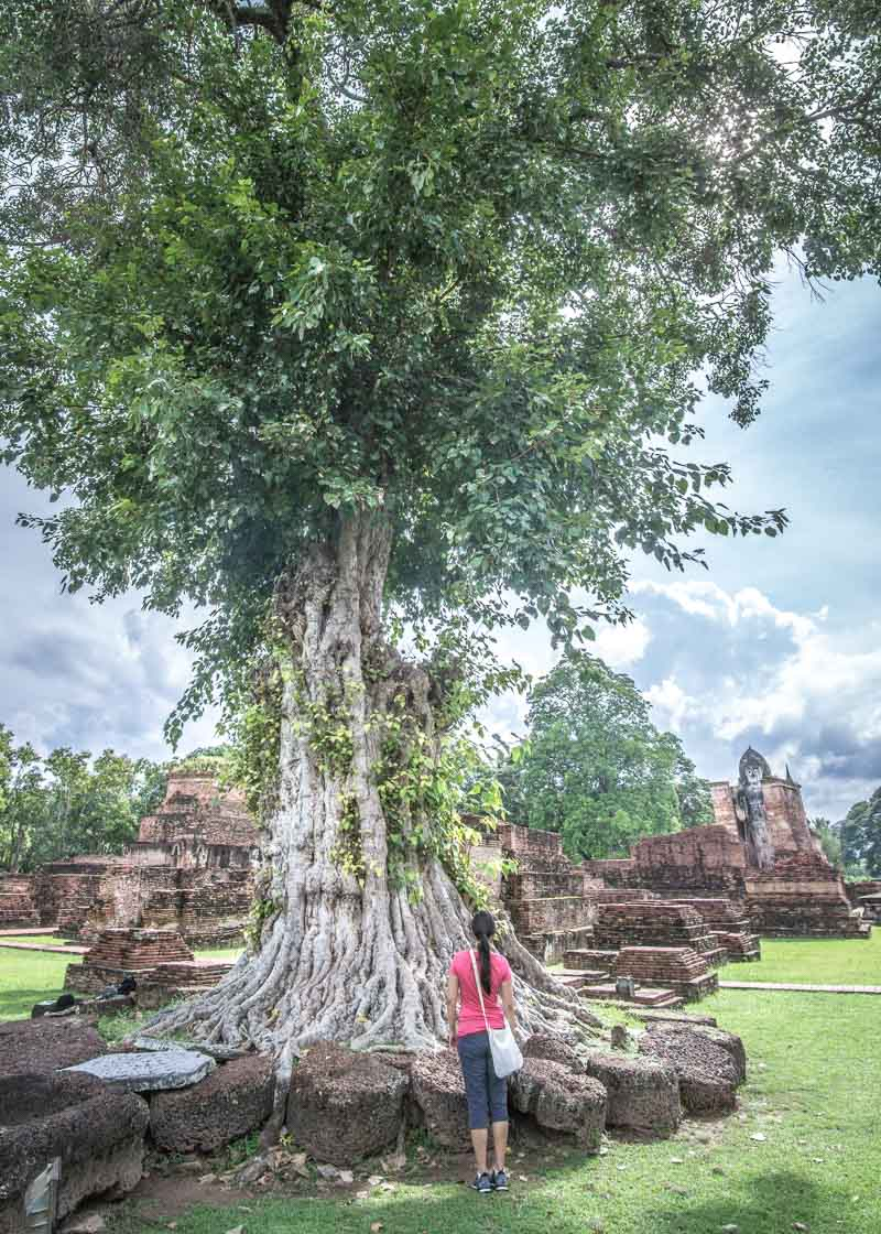 nomad living - trees in sukhothai park