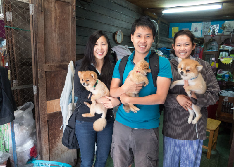 Expat life in chiang mai - thai dogs and puppies