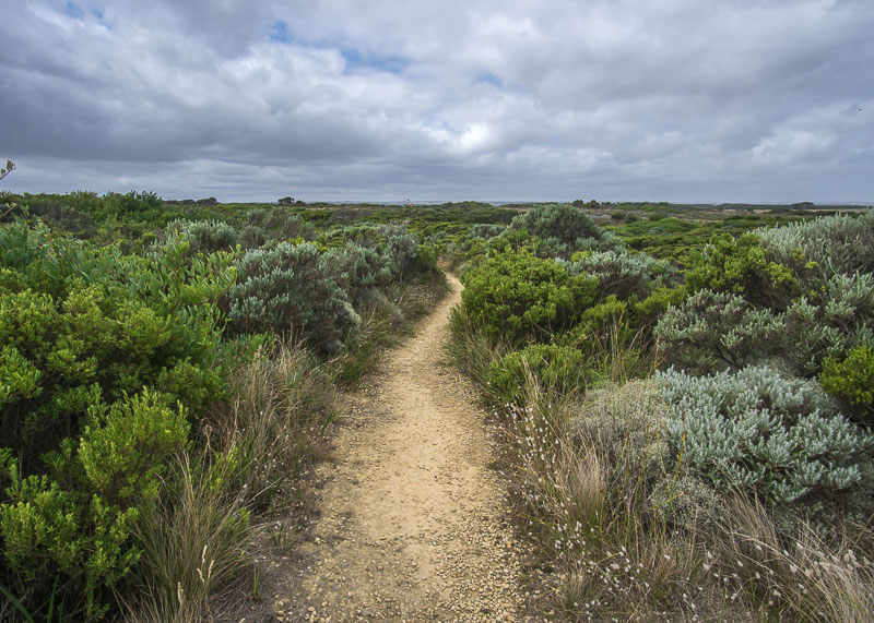 Great Ocean Road Tour From Melbourne - path in the bushes
