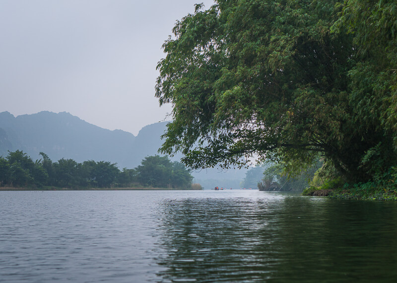 Trang An Grottoes tour - tree by water