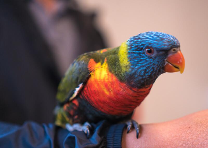 Best Western dunedin nz - parrot
