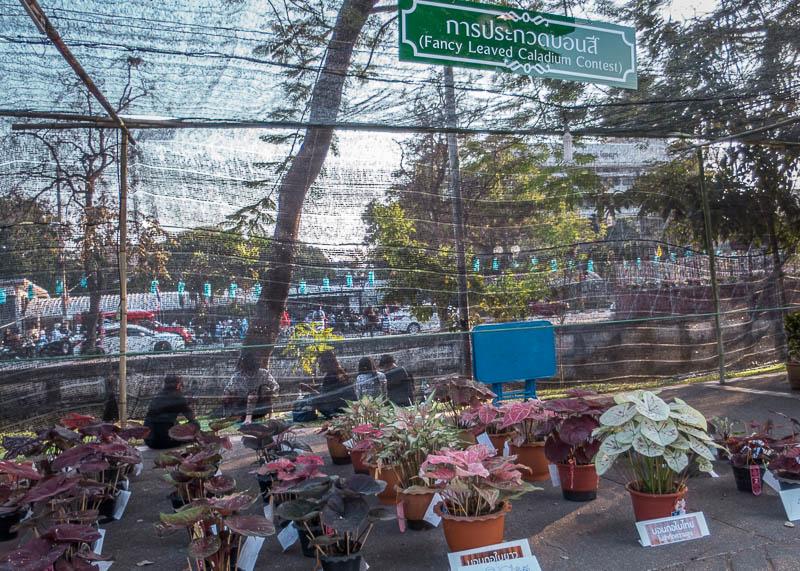chiang mai flower festival - plants