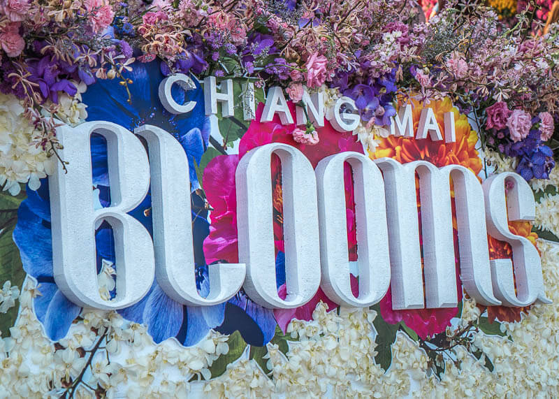 chiang mai flower festival - blooms