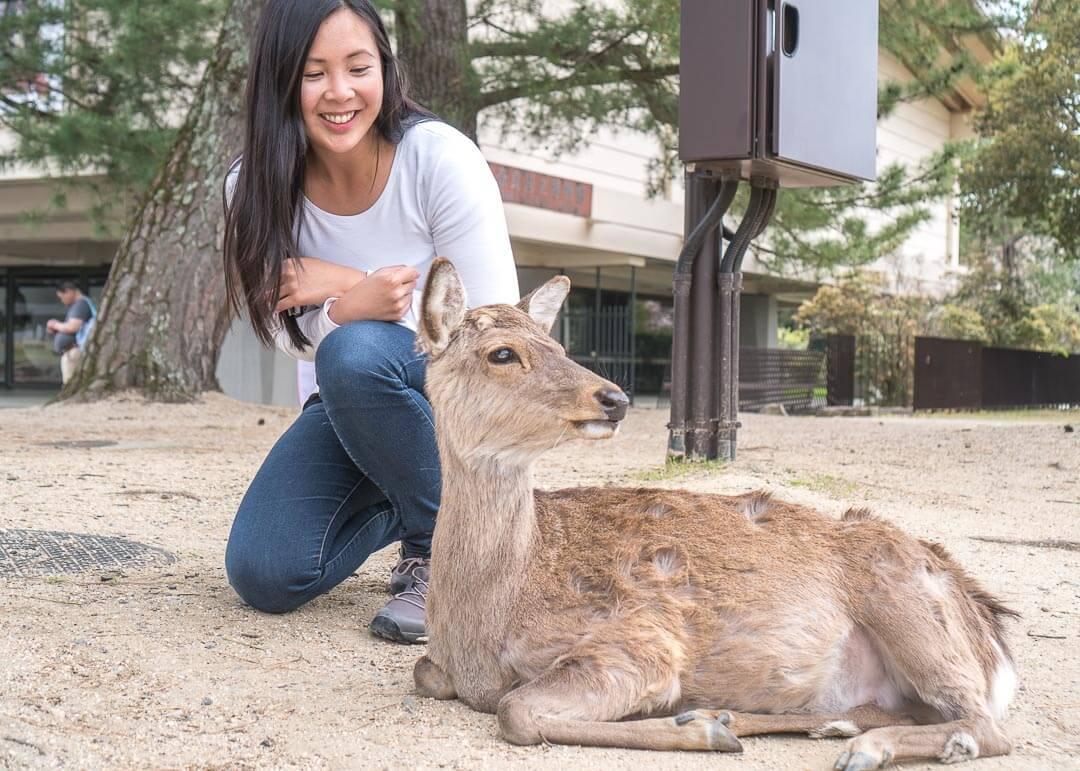 Best Day Trips Osaka Japan - Nara deer