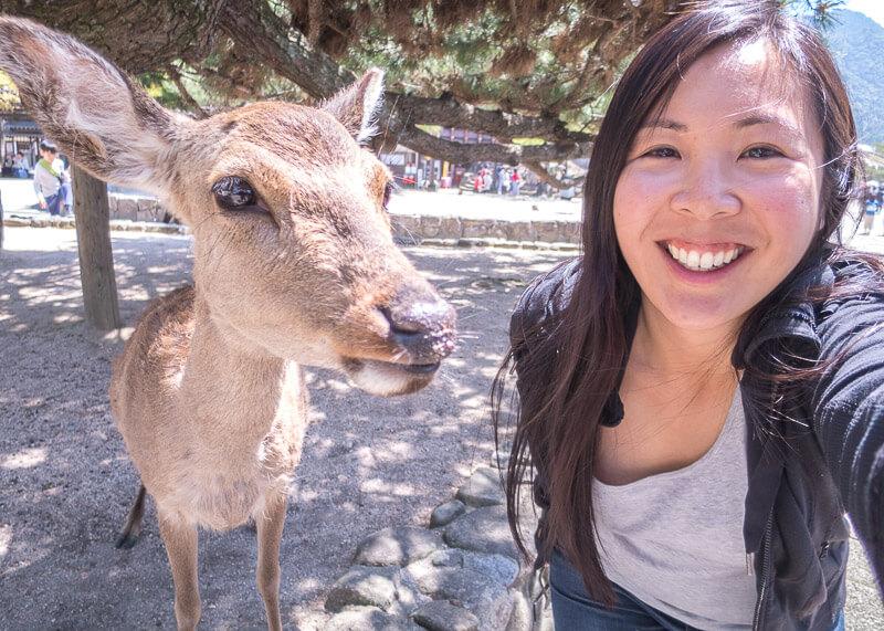modern nomad life japan taiwan - miyajima island deer