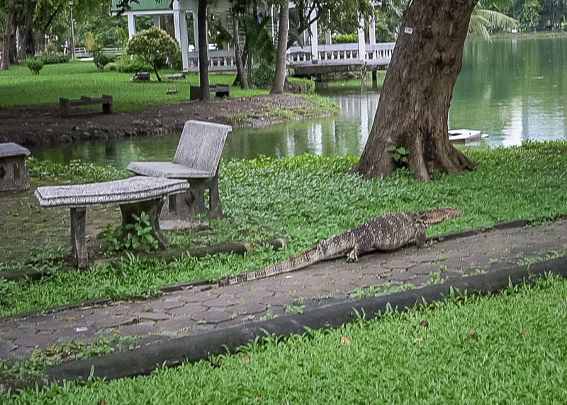bangkok travel blog - Lumphini Park Asian monitor lizard
