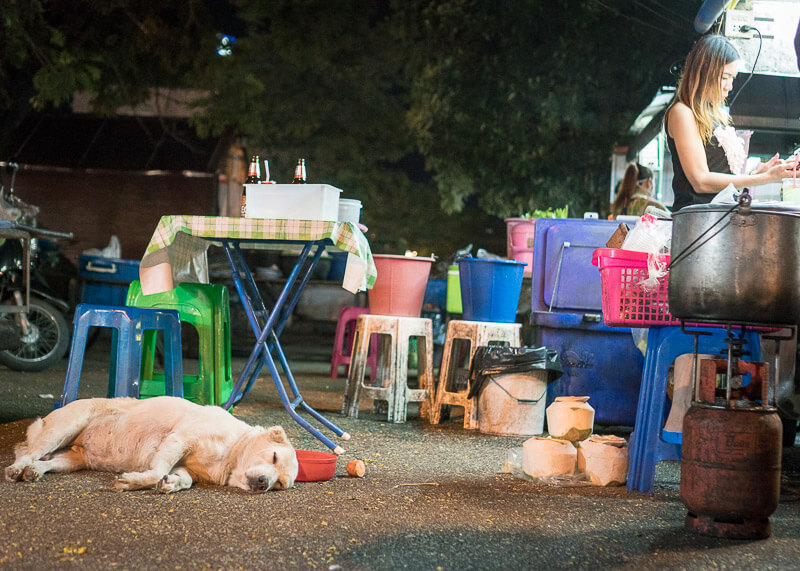 dog lying at night market | Chinese new year of the dog