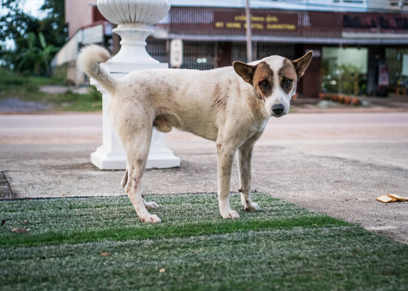 dog standing by lawn | Chinese new year of the dog