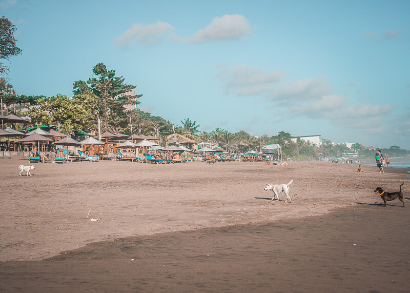 dogs by the beach | Chinese new year of the dog