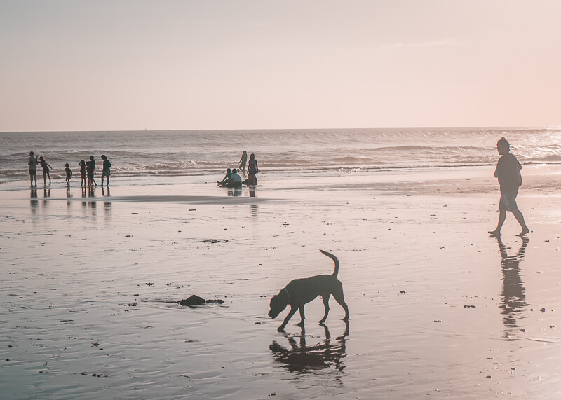dog on Petitenget beach | Chinese new year of the dog