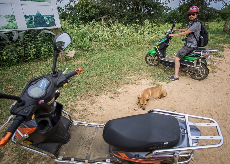dog lying by our ebikes | Chinese new year of the dog