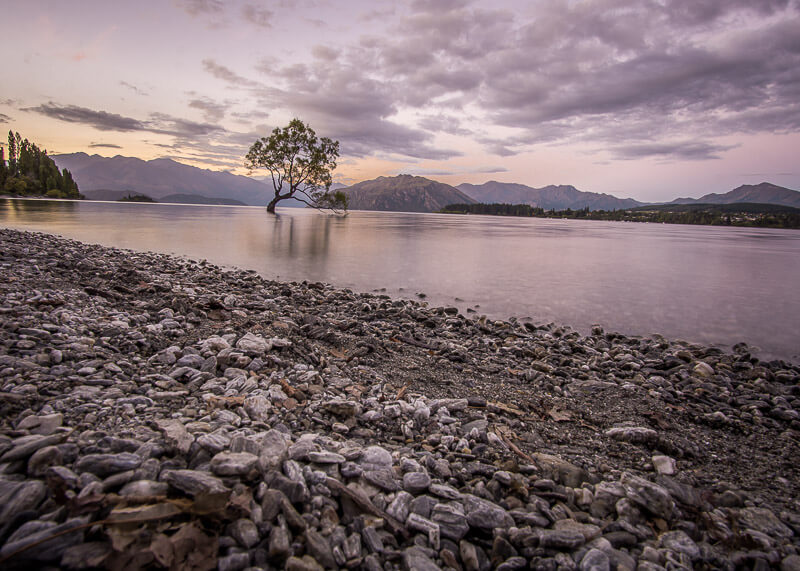 living on the road - wanaka tree