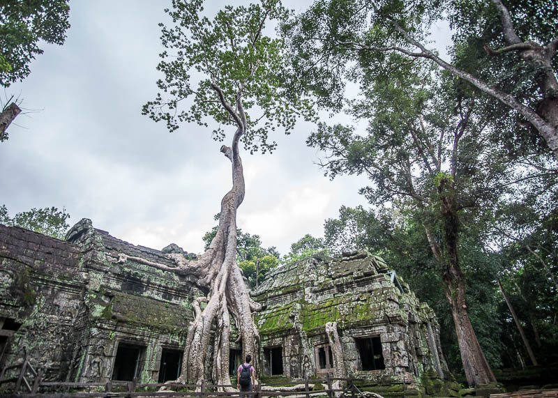 Siem Reap Travel Blog - Ta Prohm temple