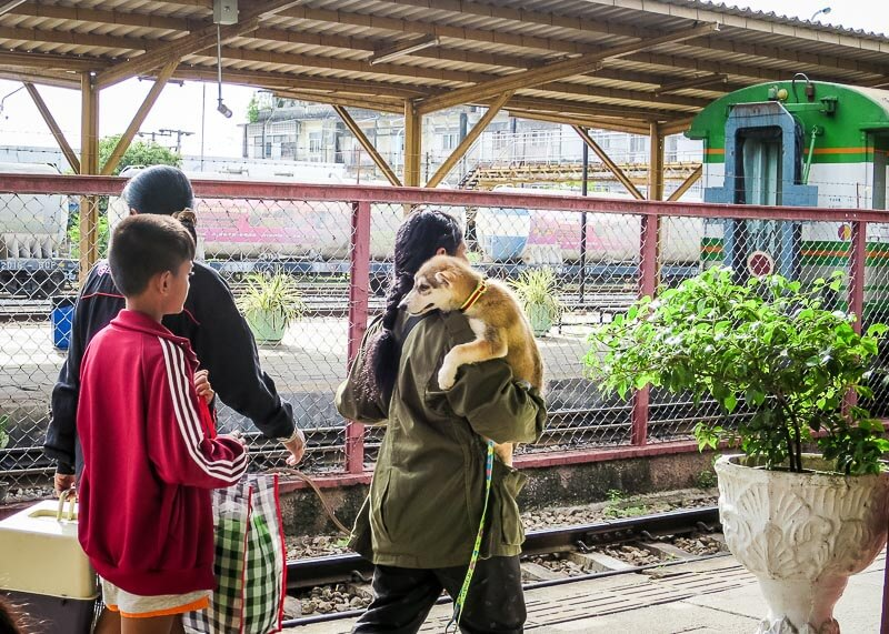 This Is What The Surat Thani Train Station Looks Like - lady carrying dog
