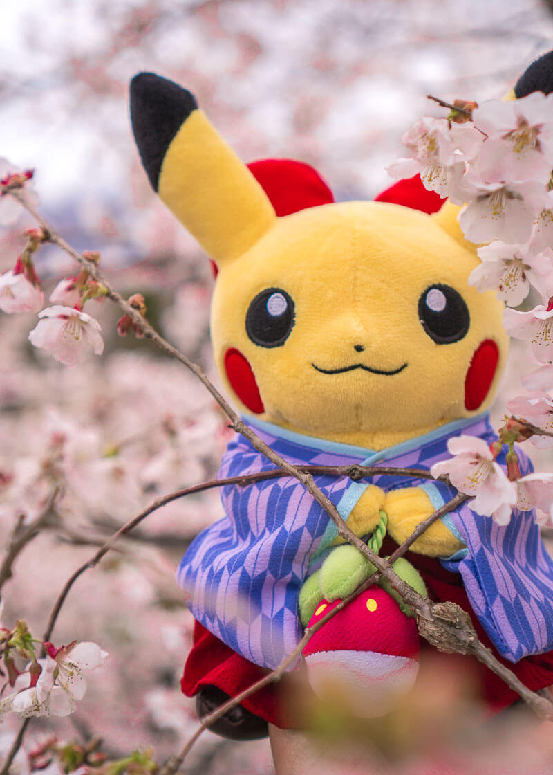 nomadic life new zealand japan - pokemon pikachu cherry blossoms photoshoot