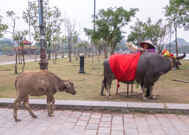ninh binh travel blog - animals in ninh binh